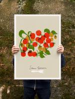 ANEK | CHERRY TOMATOES - FOOD PRINT | アートプリント/ポスター (50x70cm)