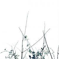 DUEALBERI | BOTANICAL ART PRINT #2 | アートプリント/ポスターの商品画像