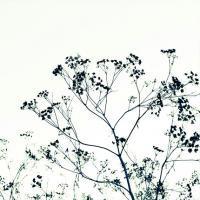 DUEALBERI | BOTANICAL ART PRINT #4 | アートプリント/ポスターの商品画像