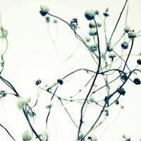 DUEALBERI | BOTANICAL ART PRINT #5 | アートプリント/ポスターの商品画像