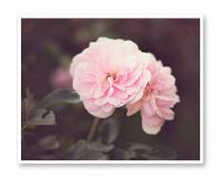 JILLIAN AUDREY   SUMMER BLUSH PHOTOGRAPHY   フォトグラフィ/ポスターの商品画像