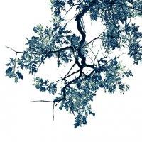 DUEALBERI | OAK TREE PRINT 2 | アートプリント/ポスターの商品画像