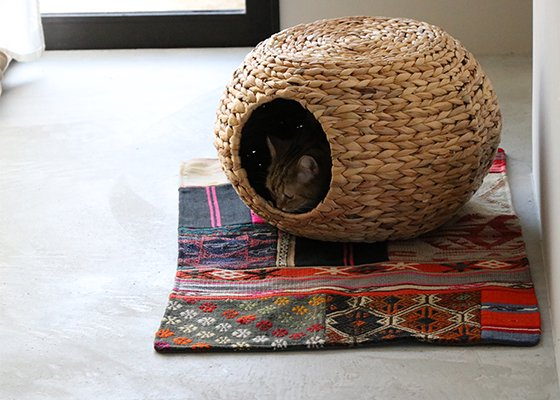 TABLE CAT HOUSE
