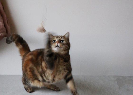 Fish The Cat / Tassel(本体)