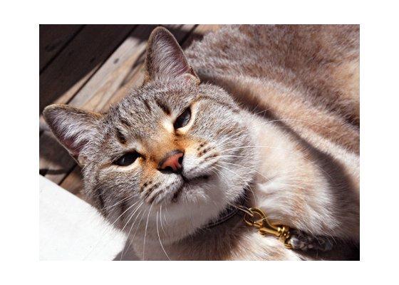 猫の首輪/散歩用【カーキ×ライム/ストライプ】