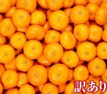 【送料無料】熊本産 訳ありみかん 5キロ