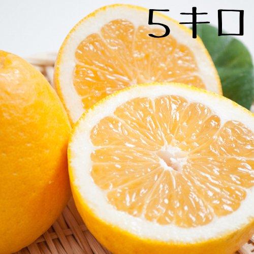 4月出荷予約 九州熊本県産ジューシーオレンジ河内晩柑3kg〜【送料無料】