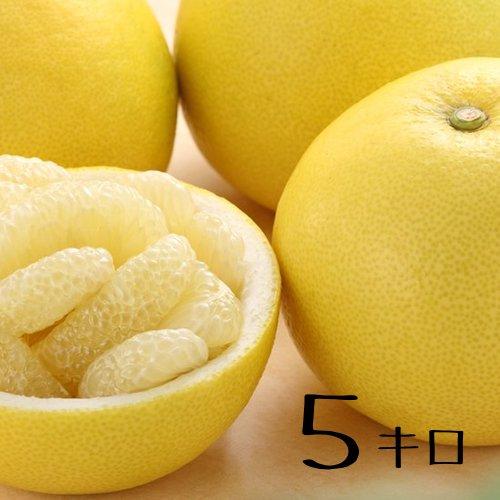 【送料無料】熊本産 パール柑 お試し3キロ・5キロ・10キロ