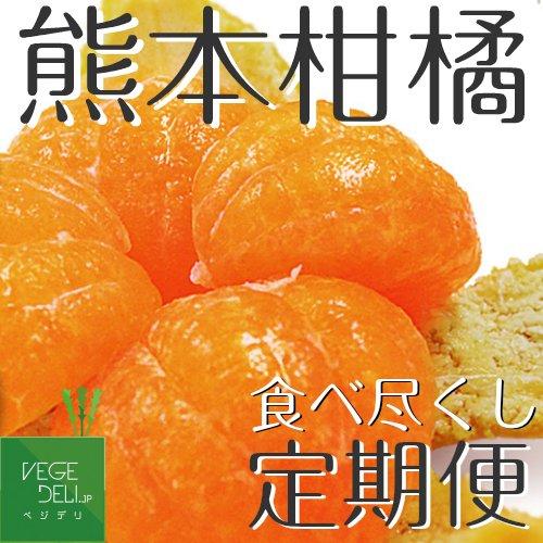 旬の柑橘定期便 熊本の柑橘食べ尽くし!【送料無料】