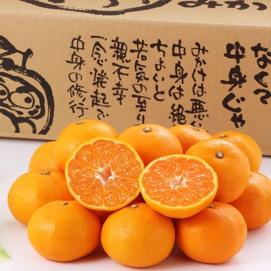 《11月-2月出荷》九州熊本県産 糖度12度以上保証 特選だるまみかん 10kg【送料無料・同梱不可】