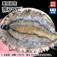 愛媛 佐田岬産 天然 【 赤アワビ 】 500g 宇和海の幸問屋 送料無料