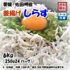 愛媛 佐田岬産 【 釜揚げしらす 】 6kg 宇和海の幸問屋 送料無料
