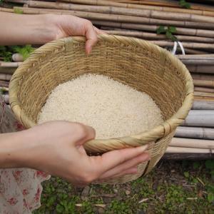 篠竹細工  竹細工 竹製品 国産 丸竹ざる 調理道具 おいしいご飯 水切りざる!宮城の米とぎざる5番