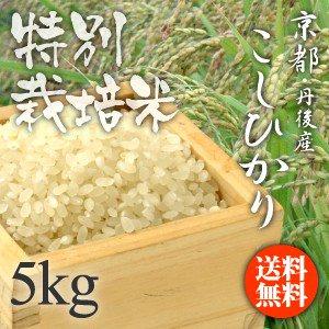 平成29年度産 特別栽培米 京都・丹後産こしひかり 【白米】【5kg】