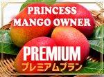 鉢植えマンゴーオーナー制  【プレミアムプラン】