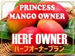 鉢植えマンゴーオーナー制  【ハーフプラン】