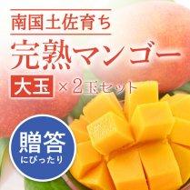 完熟マンゴー大玉2玉セット(500g以上)/メリーガーデン【甘いけれど後味さっぱり】