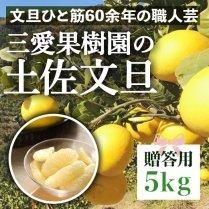 三愛果樹園の土佐文旦 5kg(7-10個)【ギフト・贈答用】
