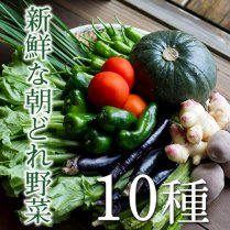 四万十町の新鮮野菜詰め合せ【新鮮な朝どれ野菜10種をお届け!】