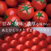 リサ・フルーツトマト約1kg(14-21玉)【誰もが驚く高糖度フルーツトマト】