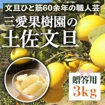 三愛果樹園の土佐文旦 3kg箱(4-7個)【ギフト・贈答用】