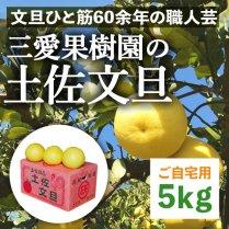 三愛果樹園の土佐文旦 5kg箱(7-10個)【ご自宅用】