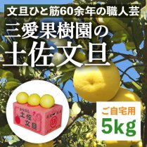 三愛果樹園の土佐文旦約5kg
