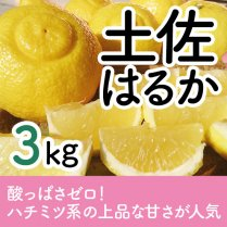土佐はるか 3kg(10-18個)【ハチミツ系の甘さが特徴】