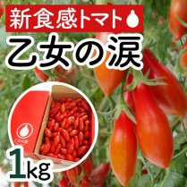 乙女の涙 約1kg(100-120粒)【おやつにぴったりの新食感トマト】の商品画像