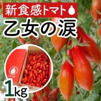 乙女の涙 約1kg(100-120粒)【おやつにぴったりの新食感トマト】