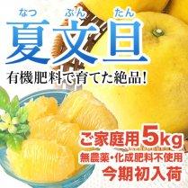 青山さんの夏文旦 約5kg(8〜15個)【ジューシーで爽やかな食感】