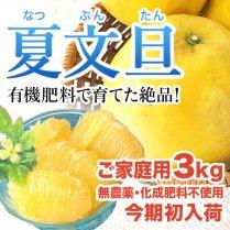 【夏の文旦を初入荷!】<br>青山さんの夏文旦<br>約3kgご家庭用