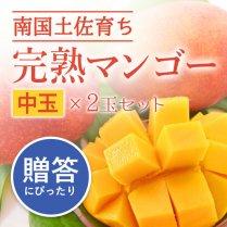 完熟マンゴー2玉セット(350g以上)/メリーガーデン【甘いけれど後味さっぱり】