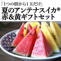 夏のアンテナスイカ®赤&黄ギフトセット/江本農園【1つの樹に1玉だけ】