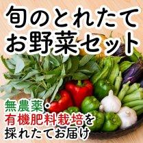 旬のとれたてお野菜セット 8〜10種セット【無農薬・有機肥料栽培】