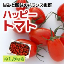 ハッピートマト(1.5kg箱)【甘みと酸味のバランス抜群】