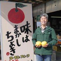 コーラルフルーツ農場の土佐文旦 4kg(2Lサイズ8個)【レギュラー】