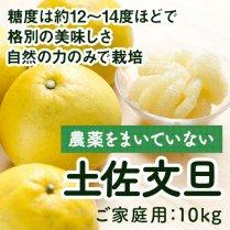 農薬をまいていない土佐文旦 約10kg【農薬不使用・自然栽培】