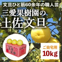 三愛果樹園の土佐文旦 10kg箱(16-18個)【ご自宅用】