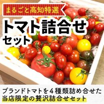 まるごと高知特選トマト詰合せセット/【美味しいトマト農家の限定選り取りセットです】