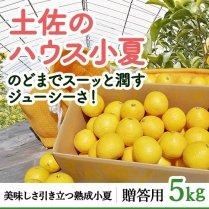 土佐のハウス小夏 約5kg箱(24〜32玉)【食べやすいハウス栽培】