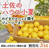 土佐のハウス小夏 約3kg箱(14〜19玉)【食べやすいハウス栽培】