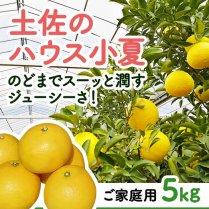 土佐のハウス小夏(家庭用)約5kg箱(24〜32玉)【食べやすいハウス栽培】