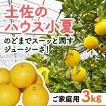 土佐のハウス小夏(ご家庭用)約3kg箱(14〜19玉)【食べやすいハウス栽培】