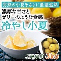 冷やし小夏(ご家庭用) 約3.0kg(15-20個)【濃厚な甘さとゼリーのような食感】