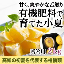有機肥料で育てた土佐小夏 贈答用約2kg(12〜15玉)【安心安全の絶品小夏】の商品画像