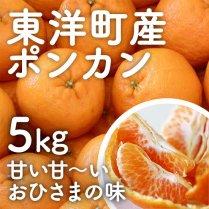 海風ぽんかん5kg箱【甘い甘いおひさまの味】
