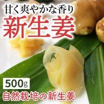 新生姜500g【栽培期間中、農薬、化学肥料、除草剤不使用】