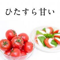 【先行予約受付中!】徳谷トマト52番1kg (14-20玉)【高知が誇る最高級フルーツトマト】