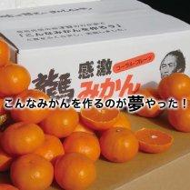 龍馬感激みかん 3kg箱(24-36個)【当店大人気みかん】